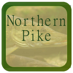 LFT Icon Northern Pike 2